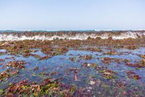 bienfaits algues marine circulation ,fibromyalgie,toxines,fermetée de la peau,vitamines,oméga